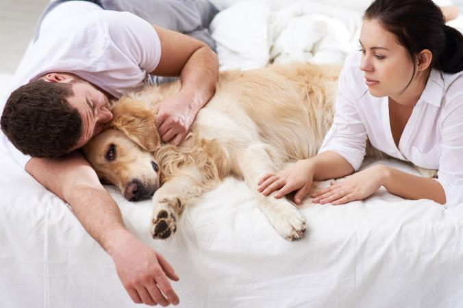 what to do when your dog dies and your sad